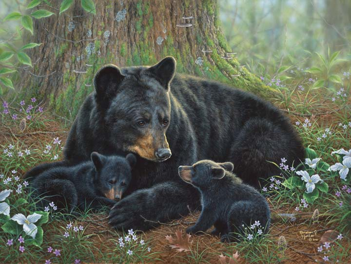 bear painting with cubs by abraham hunter